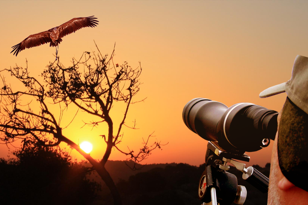 Brightstar Travel    Bird watching